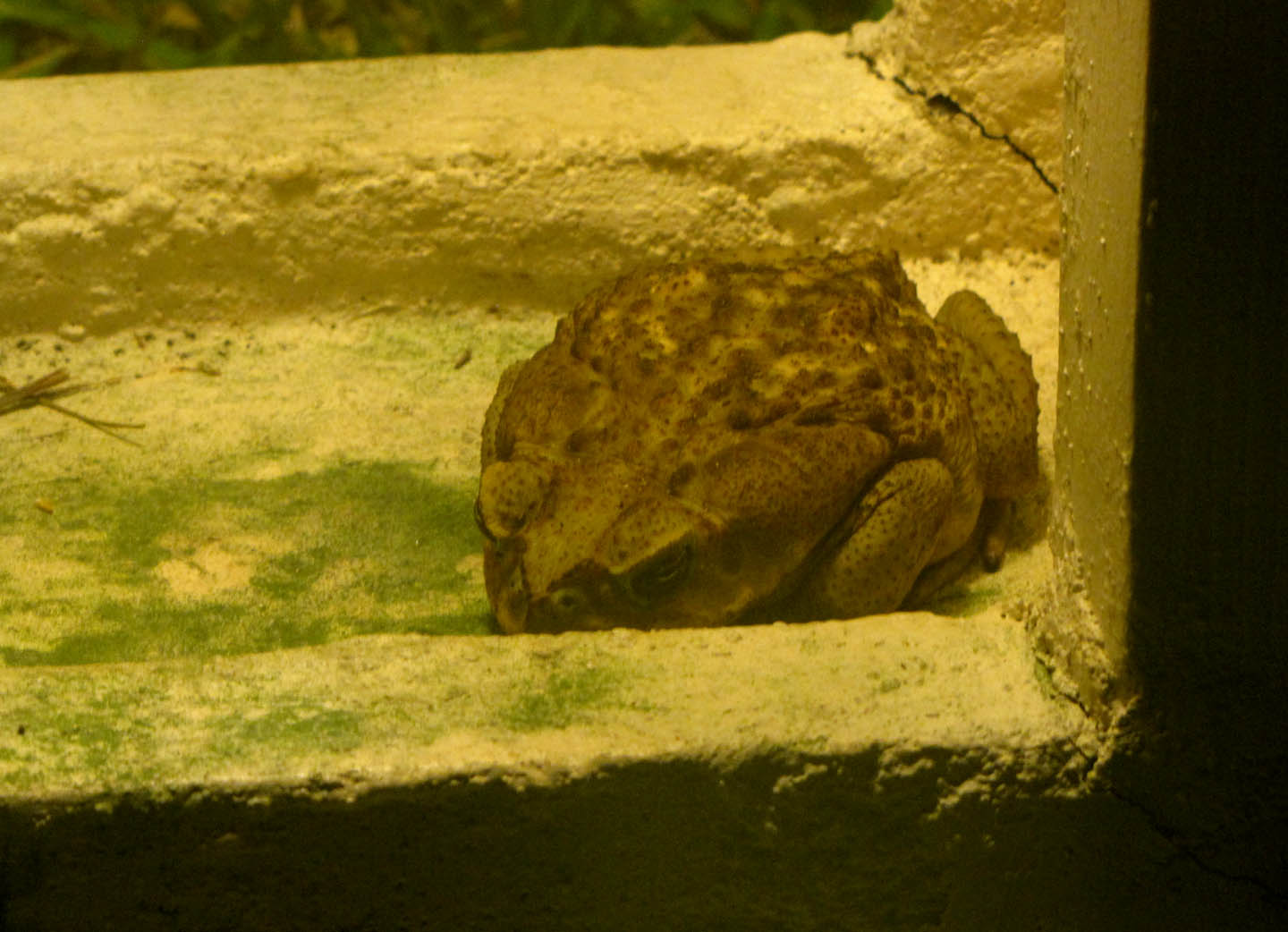 06-13-Toad-01