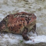07-09-Toad-01