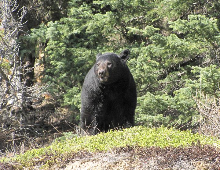 AN-Jasper-Banff-04