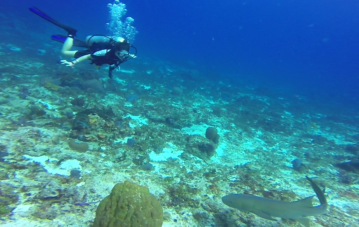 DAY 3 Dive-02