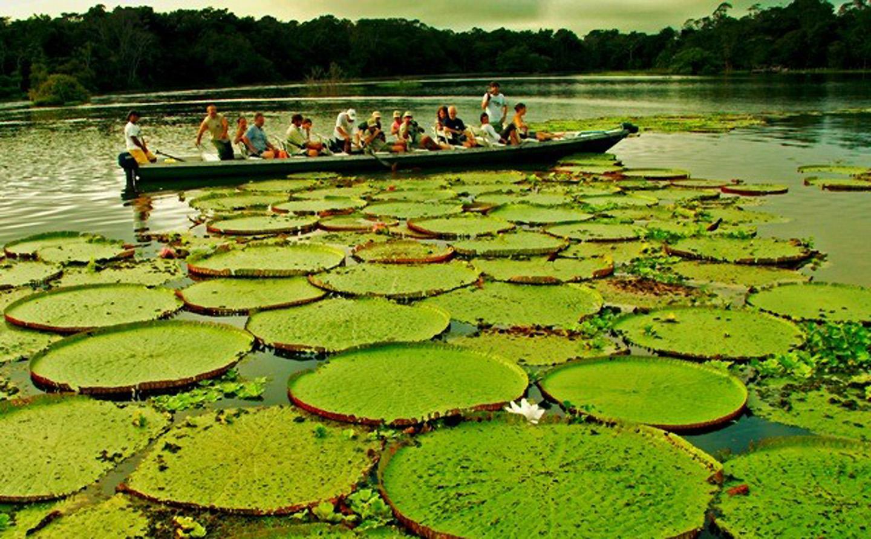 AMAZONIA-WEB-10