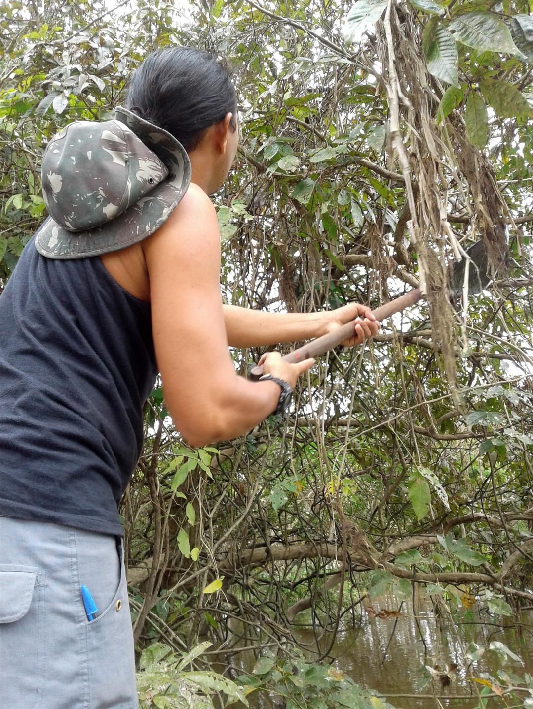 AMAZONIA-WEB-18