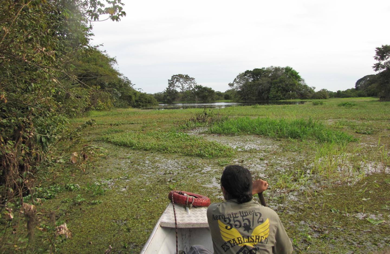 AMAZONIA-WEB-18aa