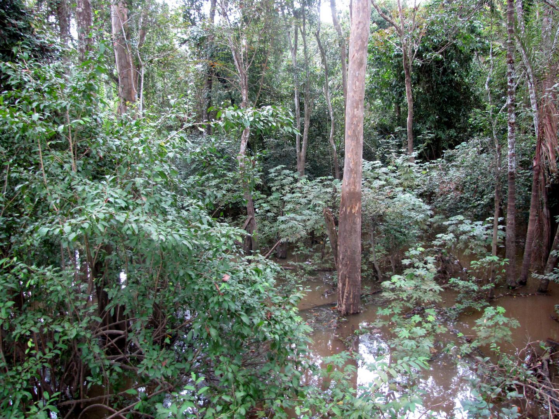 AMAZONIA-WEB-18j