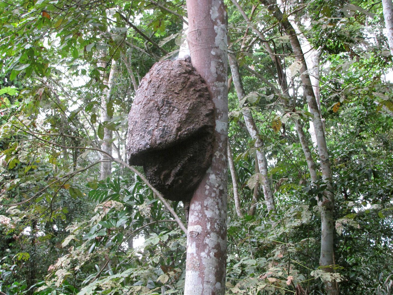 AMAZONIA-WEB-18k