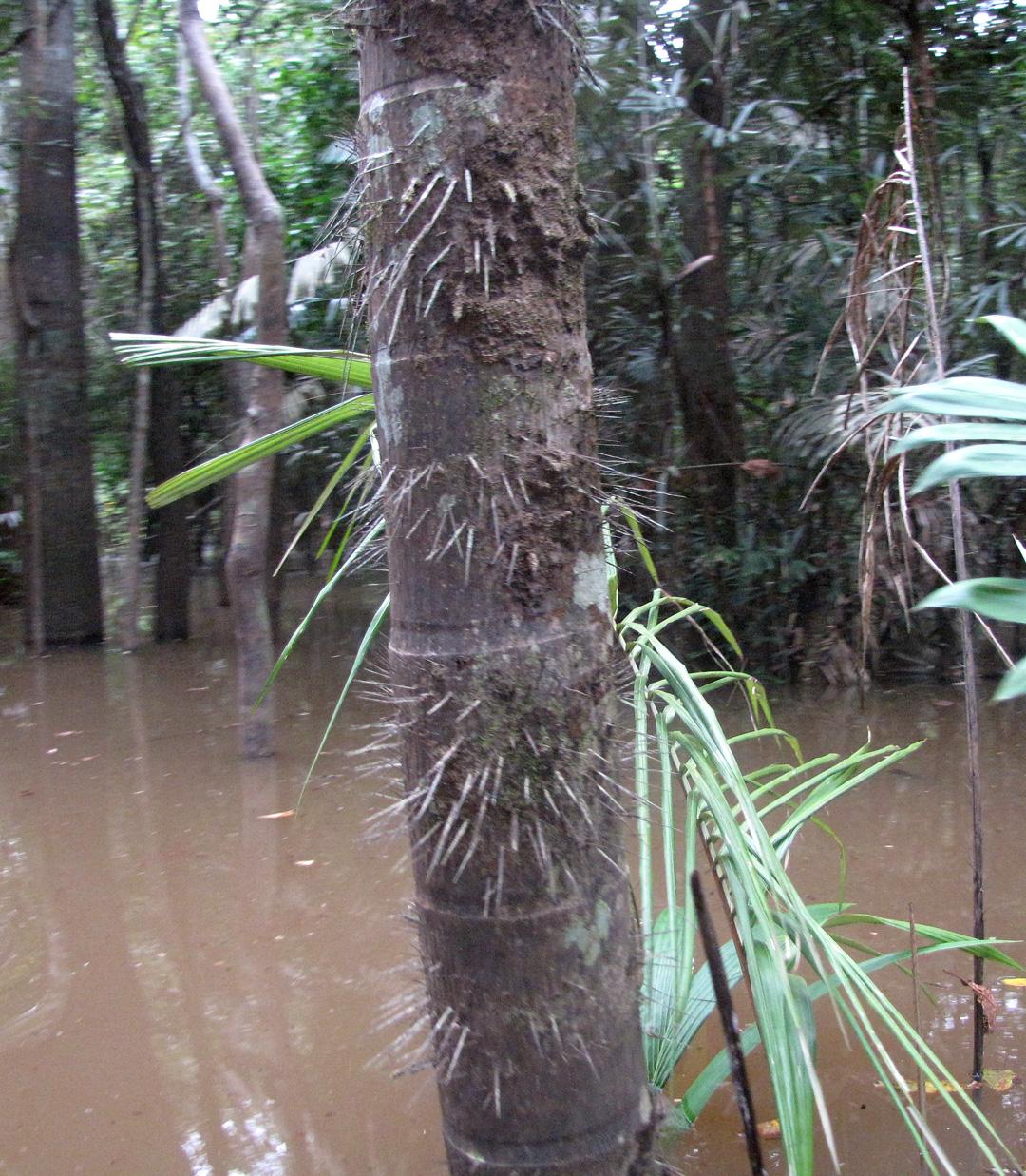 AMAZONIA-WEB-18p