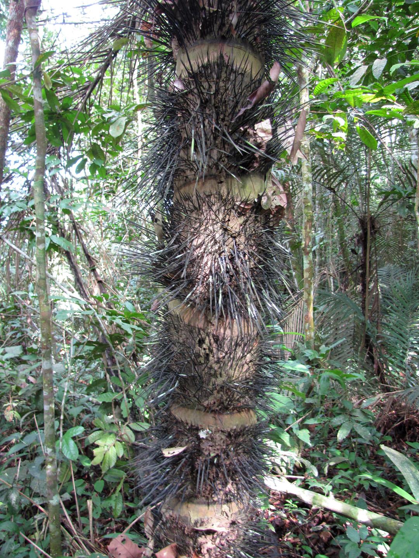 AMAZONIA-WEB-18s
