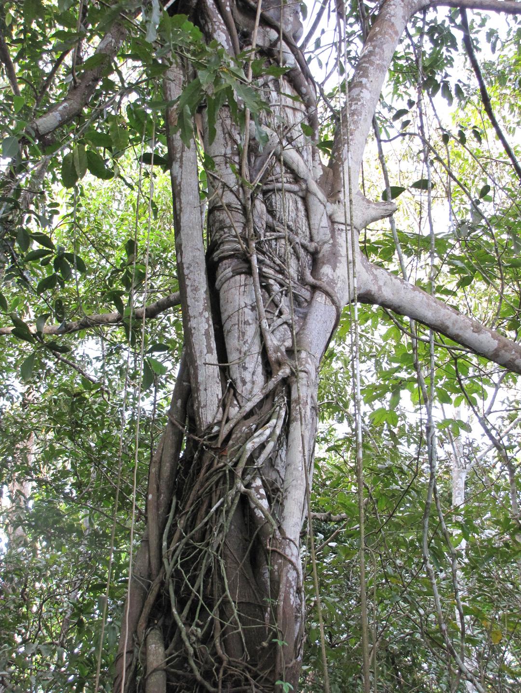 AMAZONIA-WEB-18x