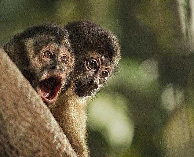 AMAZONIA-WEB-Monkey-01