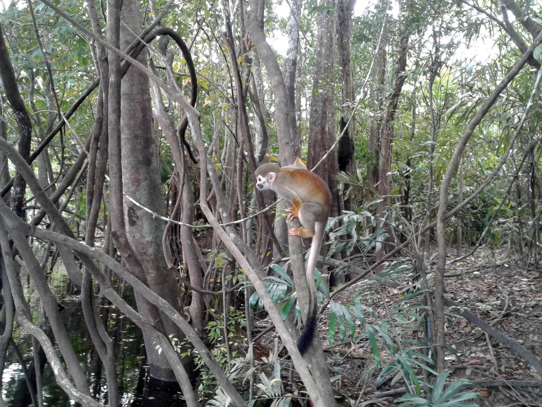AMAZONIA-WEB-Monkey-02