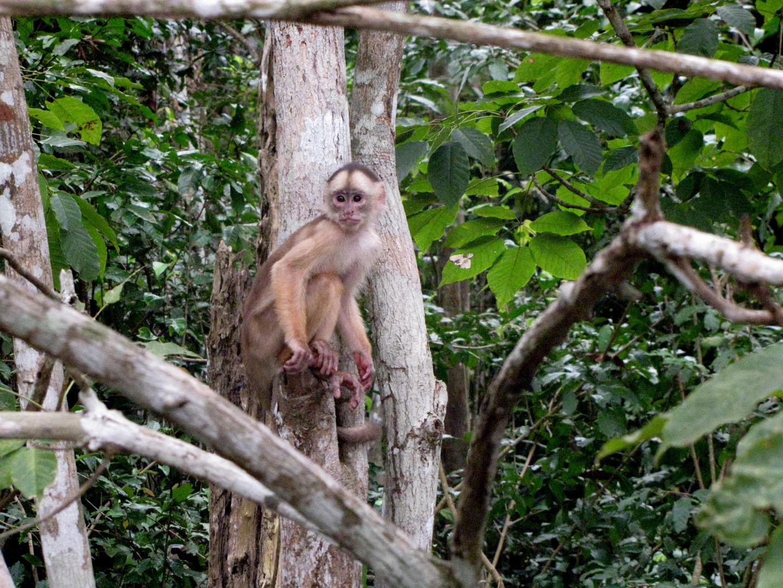 AMAZONIA-WEB-Monkey-03