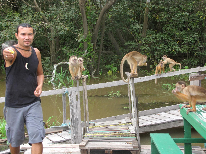 AMAZONIA-WEB-Monkey-04