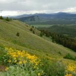 ALEX-Yellowstone-01c