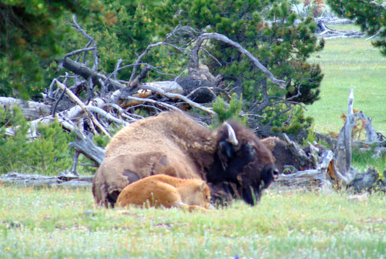 ALEX-Yellowstone-03b