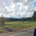 ALEX-Yellowstone-04b