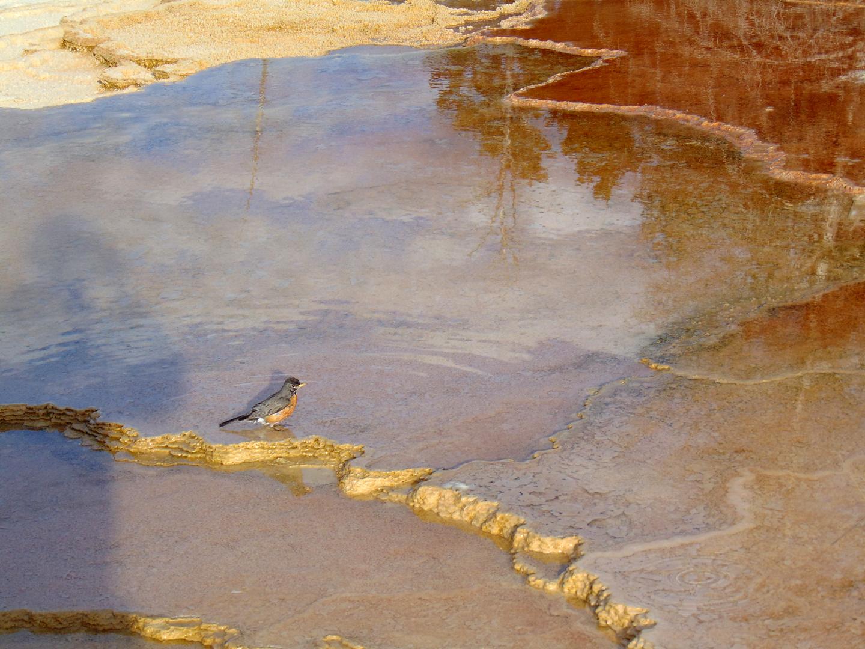ALEX-Yellowstone-05d