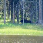 ALEX-Yellowstone-07j