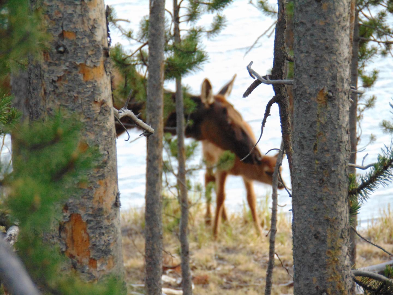 ALEX-Yellowstone-10e