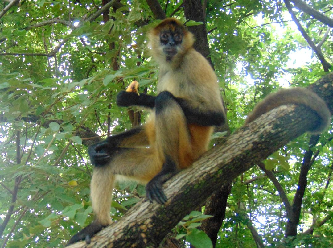 +D-08-Monkey